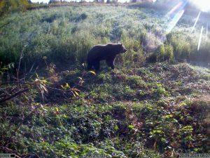 Kubik сработал на медведя