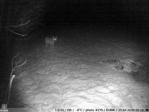 ночное фото с Kubik - волк