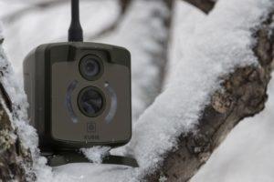 фотоловушка Kubik зимой