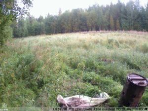 охота с фотоловушкой KUBIK