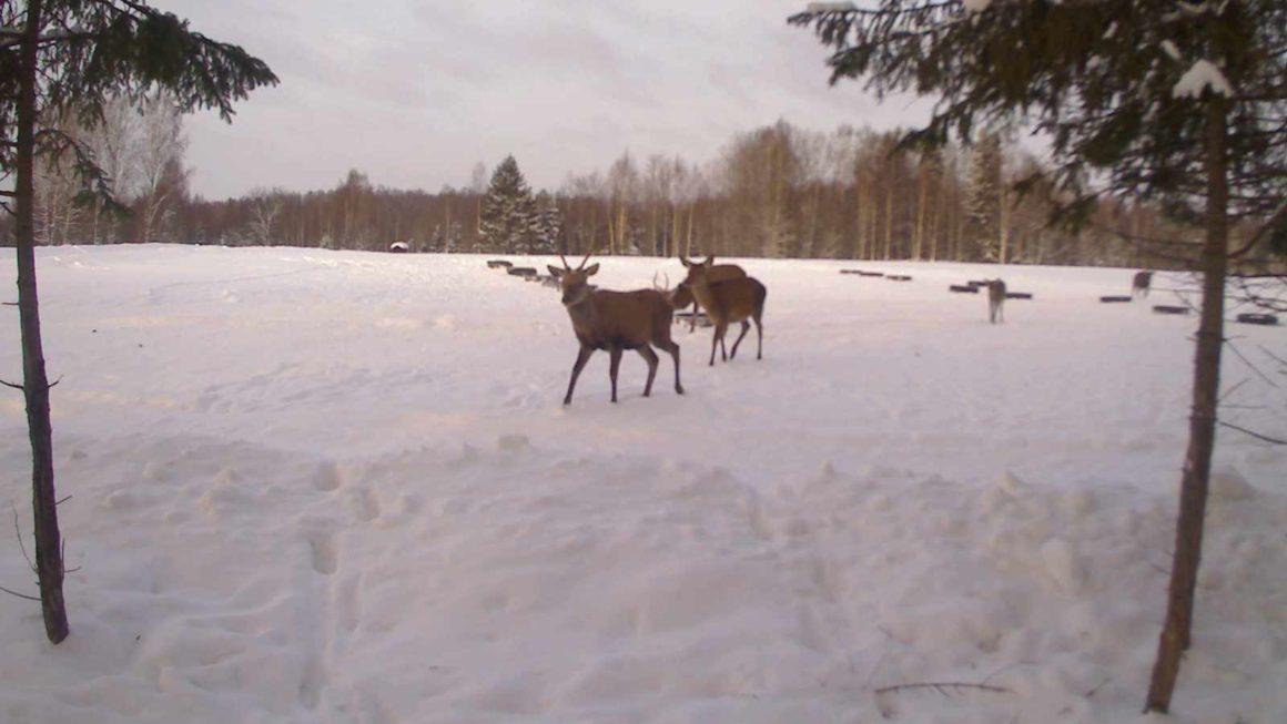 зимнее фото c фотоловушки KUBIK