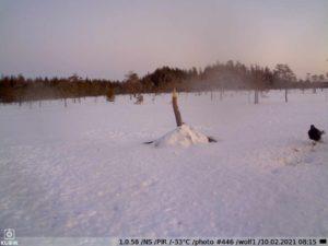 зимнее фото c KUBIK — привада
