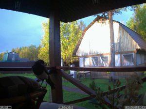 фото с фотоловушки Kubik - птица на даче