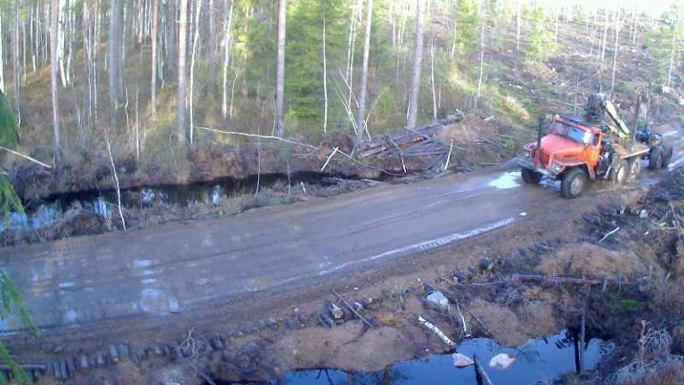 Контроль въезда на делянку в Ленинградской области