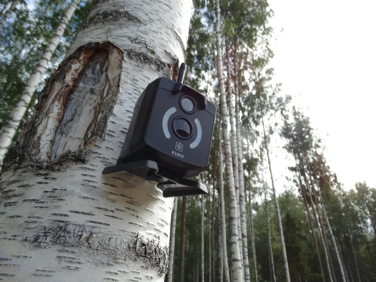 фотоловушки для охраны дачи отзывы